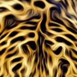bird-feather-patterns
